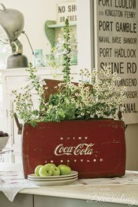 daisies in Coca Cola cooler