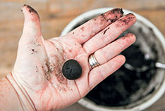 Make Seed Bombs for Your Garden