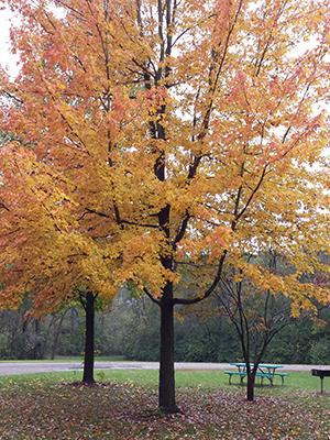 Outdoor Autumn Activities