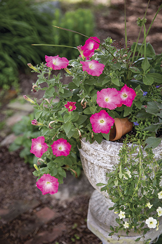Prep Your Garden Containers for Planting